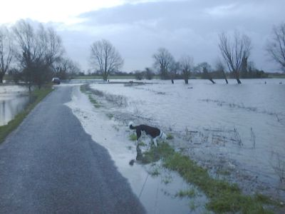Flooding - February 2001